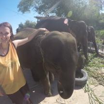Elefantenliebe.