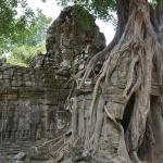 Angkor Thom Treedoor