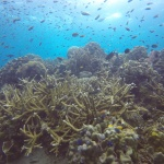 Reef auf Koh Tao