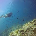 Unterwasserwelt Bine taucht