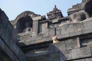 Yogyakarta Cat